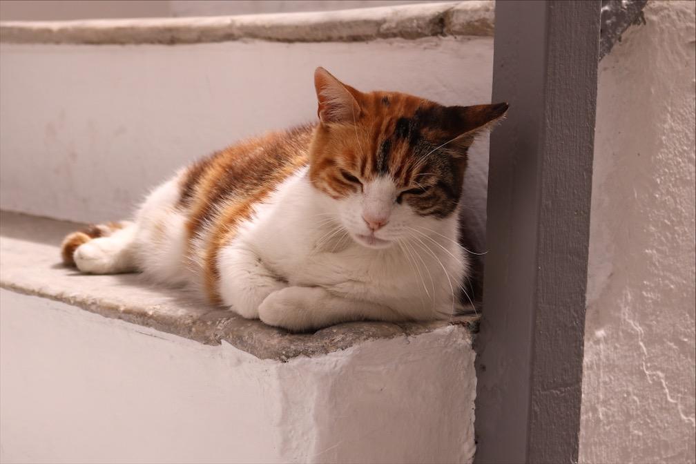 Mykonos Katze