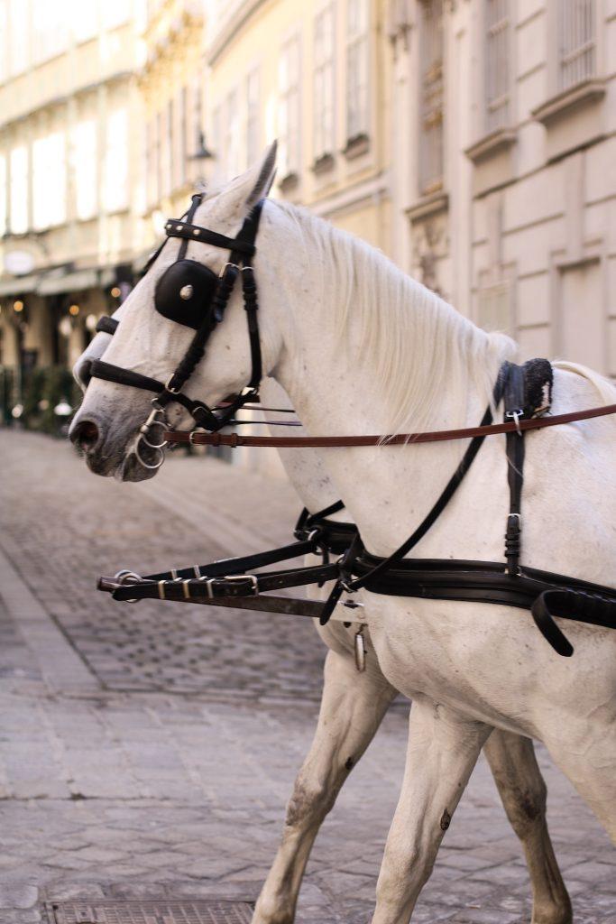 Wien Pferdekutsche